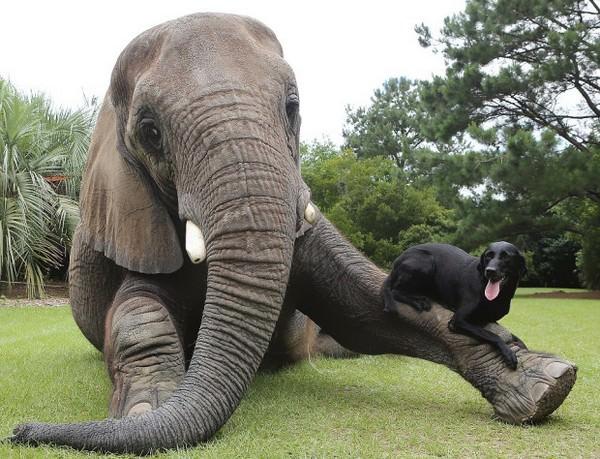 ¡La amistad no tiene límites! En el mundo animal tampoco 5