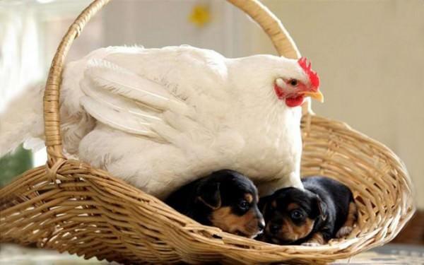 ¡La amistad no tiene límites! En el mundo animal tampoco 6
