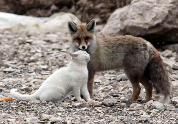 ¡La amistad no tiene límites! En el mundo animal tampoco 7