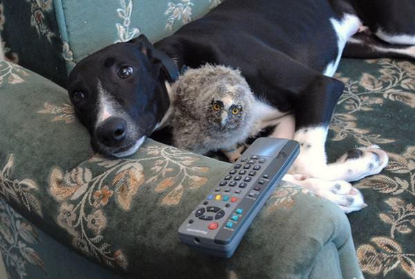 ¡La amistad no tiene límites! En el mundo animal tampoco 8