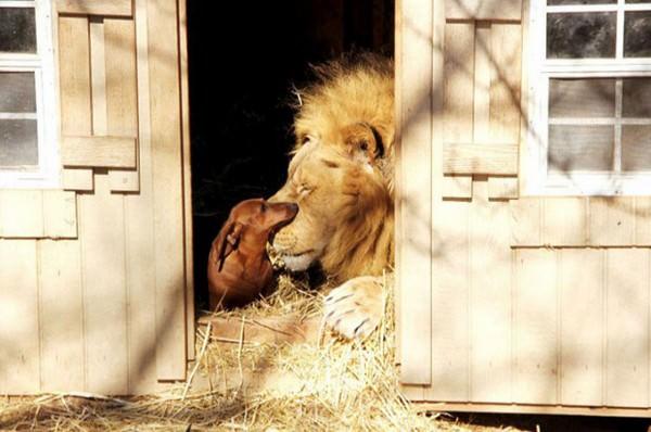¡La amistad no tiene límites! En el mundo animal tampoco 9