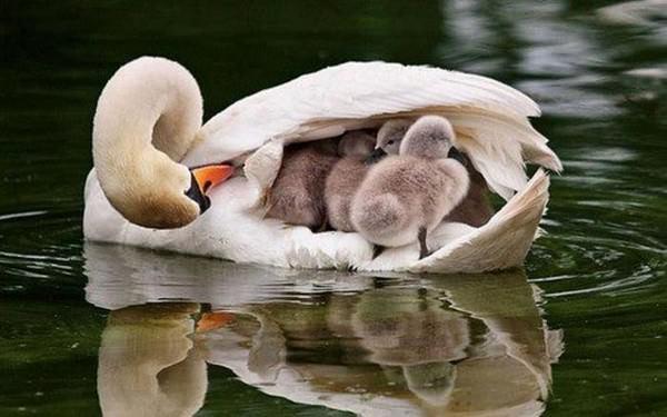 Bonitas fotografías de madres y sus hijos en la naturaleza 10