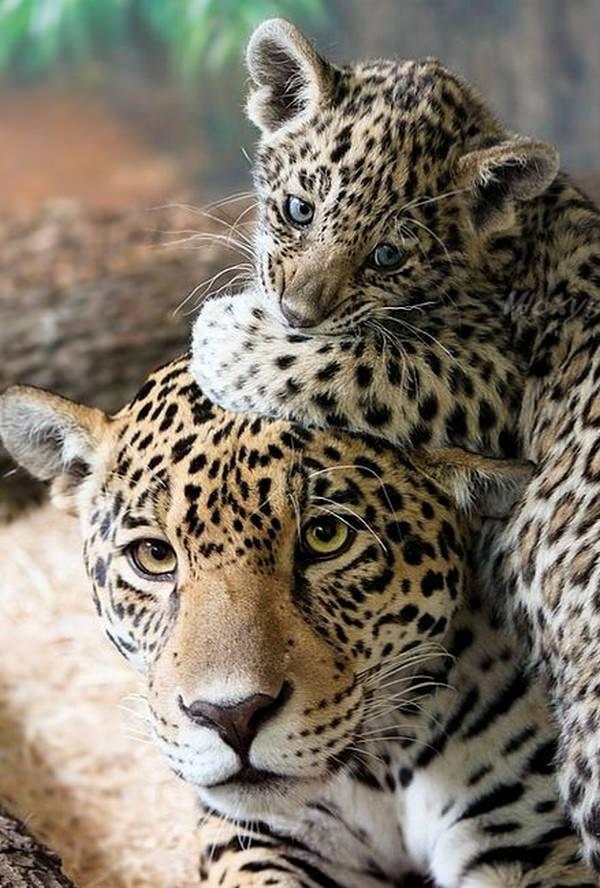 Bonitas fotografías de madres y sus hijos en la naturaleza 11