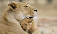 Bonitas fotografías de madres y sus hijos en la naturaleza
