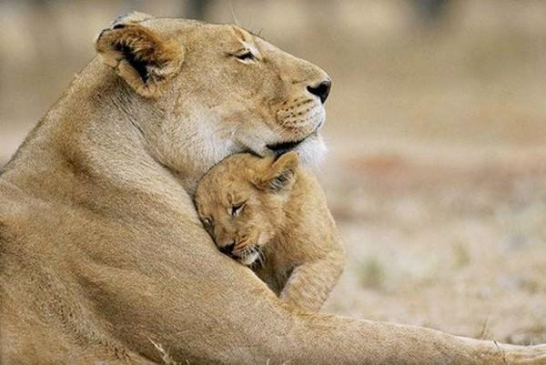 Bonitas fotografías de madres y sus hijos en la naturaleza 2