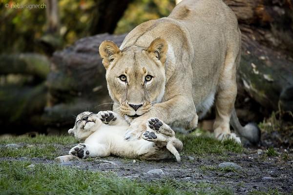 Bonitas fotografías de madres y sus hijos en la naturaleza 4