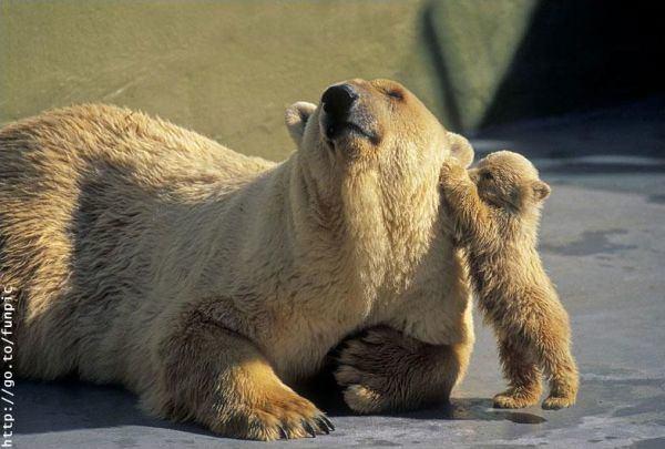 Bonitas fotografías de madres y sus hijos en la naturaleza 5