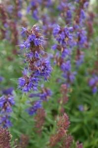 -Consejos de bienestar las mejores plantas medicinales y sus propiedades