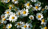 Consejos de bienestar las mejores plantas medicinales y sus propiedades