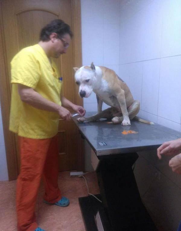 La historia de Yak, el perro que fue maltratado por no querer pelear 2