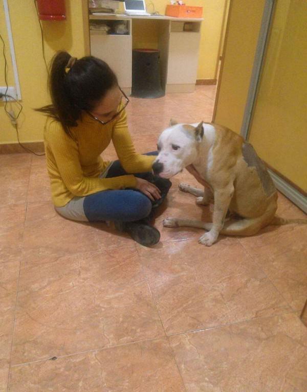 La historia de Yak, el perro que fue maltratado por no querer pelear 3