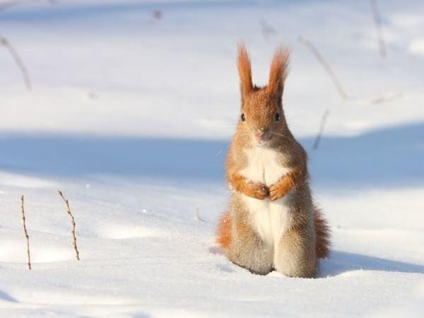 Las imágenes más bonitas de la naturaleza en invierno 3