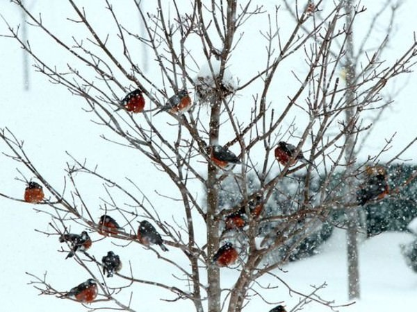 Las imágenes más bonitas de la naturaleza en invierno 5