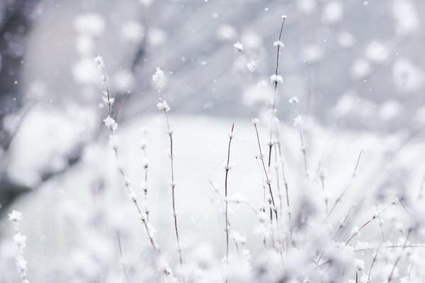 Las imágenes más bonitas de la naturaleza en invierno 6