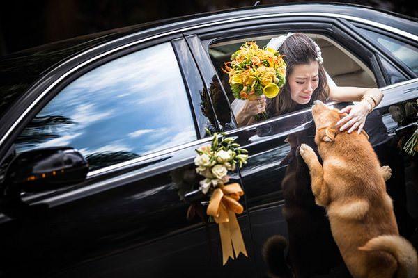 Las mejores fotografías de boda de 2014 9