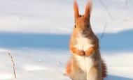 Las imágenes más bonitas de la naturaleza en invierno