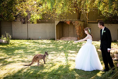 ¿Te imaginas celebrar tu boda en el zoo 1