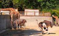 ¿Te imaginas celebrar tu boda en el zoo