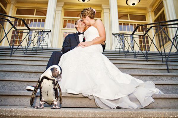 ¿Te imaginas celebrar tu boda en el zoo 4