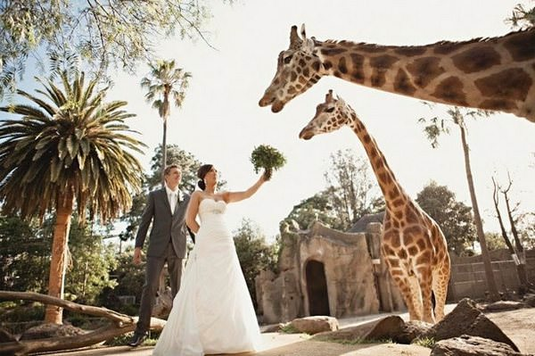 ¿Te imaginas celebrar tu boda en el zoo 9