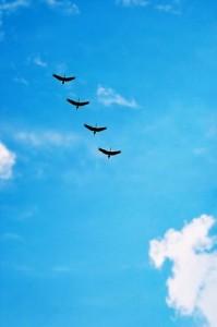 -Cuentos para pensar Animarse a volar de Jorge Bucay