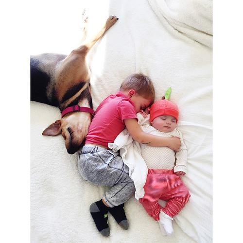 Dos hermanos y su perro compañeros inseparables 5