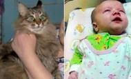 Este gato callejero salvó la vida de un bebé abandonado