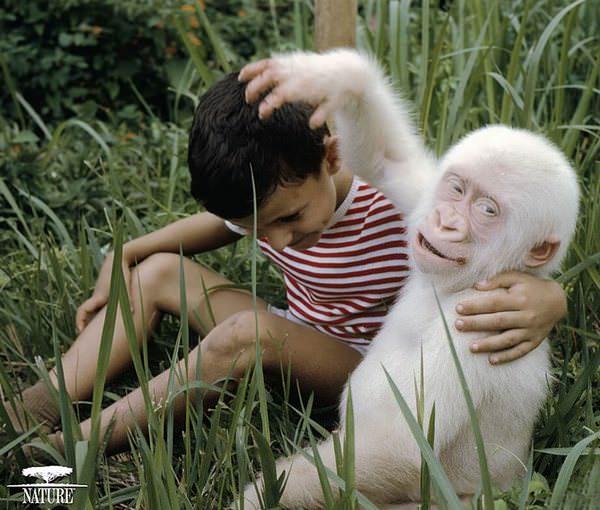 Estos animales albinos nos enseñan la importancia del respeto por la diversidad 11