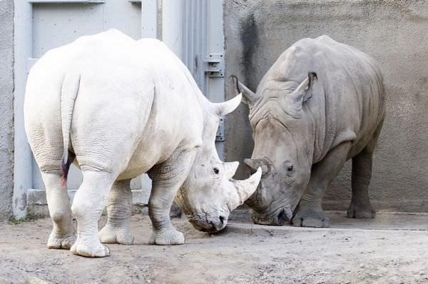 Estos animales albinos nos enseñan la importancia del respeto por la diversidad 12