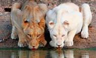 Estos animales albinos nos enseñan la importancia del respeto por la diversidad