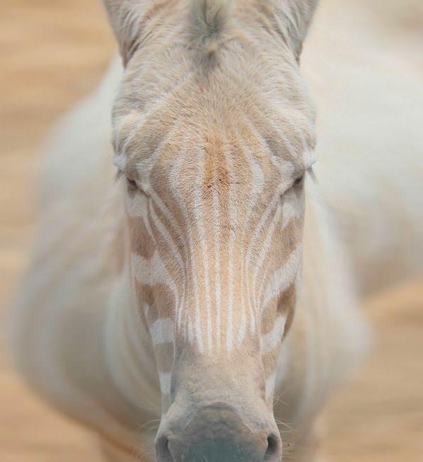 Estos animales albinos nos enseñan la importancia del respeto por la diversidad 4