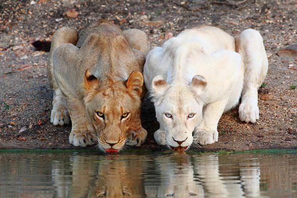 Estos animales albinos nos enseñan la importancia del respeto por la diversidad 8
