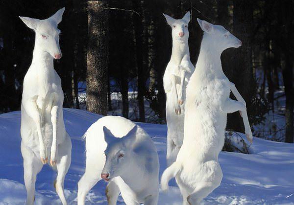 Estos animales albinos nos enseñan la importancia del respeto por la diversidad 9