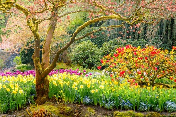 Las fotografías de los mejores paisajes de la primavera 1