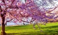 Las fotografías de los mejores paisajes de la primavera