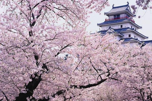 Las fotografías de los mejores paisajes de la primavera 2