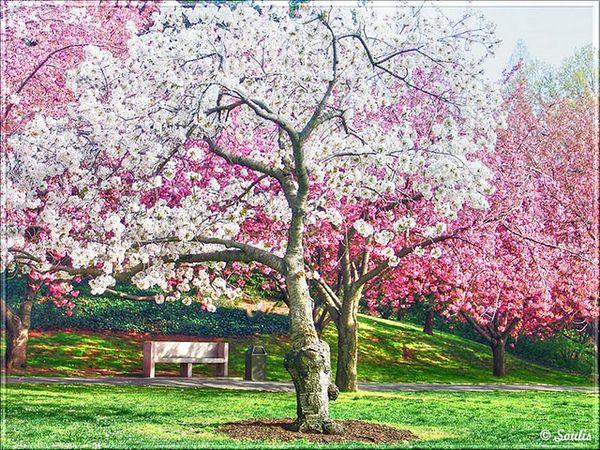 Las fotografías de los mejores paisajes de la primavera 4