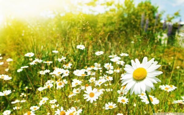 Las fotografías de los mejores paisajes de la primavera 8