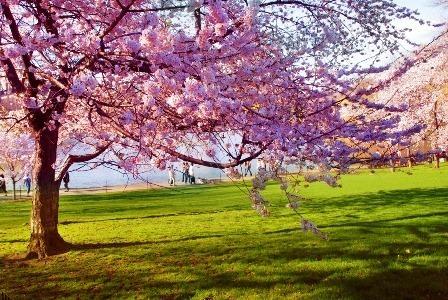 Las fotograf as de los mejores paisajes de la primavera for Jardines en primavera fotos
