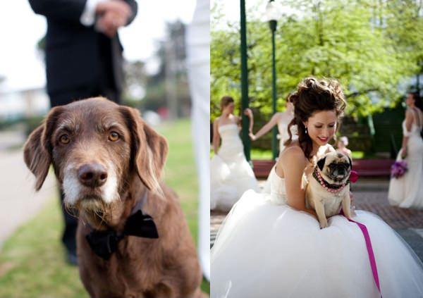 Mascotas fotografías de bodas con los novios y sus mascotas 12