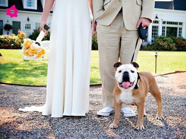 Mascotas fotografías de bodas con los novios y sus mascotas 3