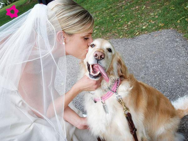 Mascotas fotografías de bodas con los novios y sus mascotas 4
