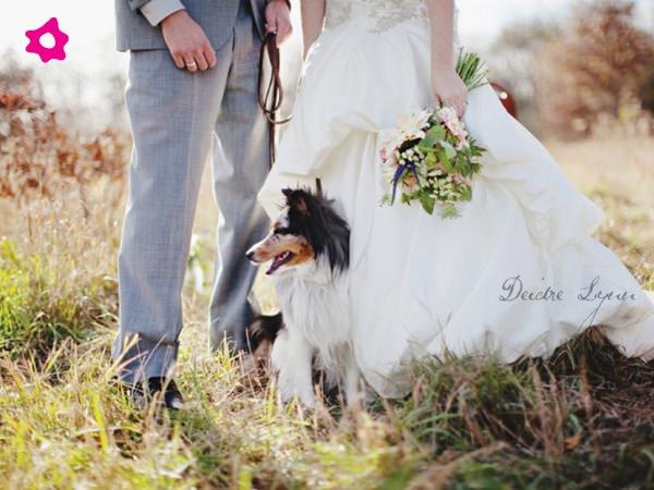 Mascotas fotografías de bodas con los novios y sus mascotas 5