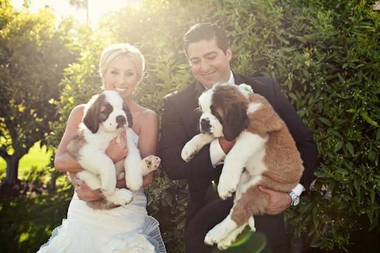 Mascotas fotografías de bodas con los novios y sus mascotas 7