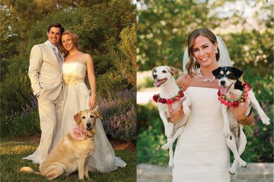 Mascotas fotografías de bodas con los novios y sus mascotas 8
