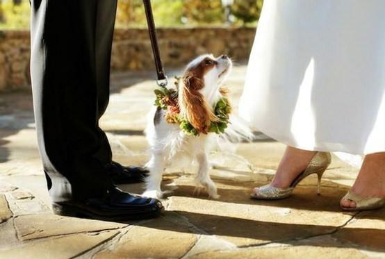 Mascotas fotografías de bodas con los novios y sus mascotas 9
