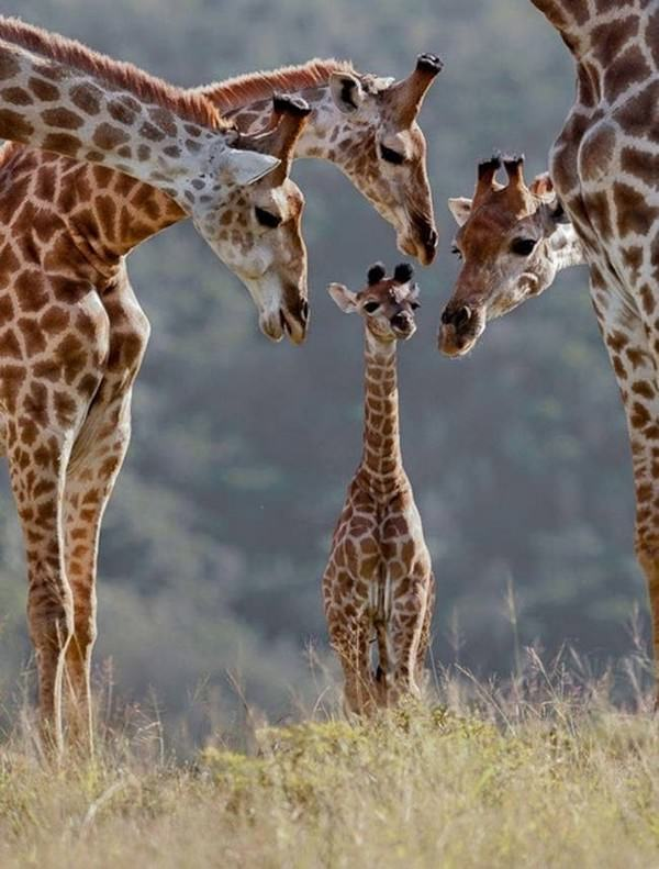 Fotos de familias animales muy tiernas y bonitas 10