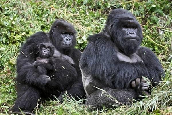 Fotos de familias animales muy tiernas y bonitas 12