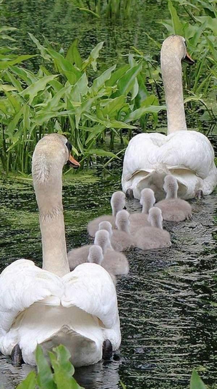 Fotos de familias animales muy tiernas y bonitas 2