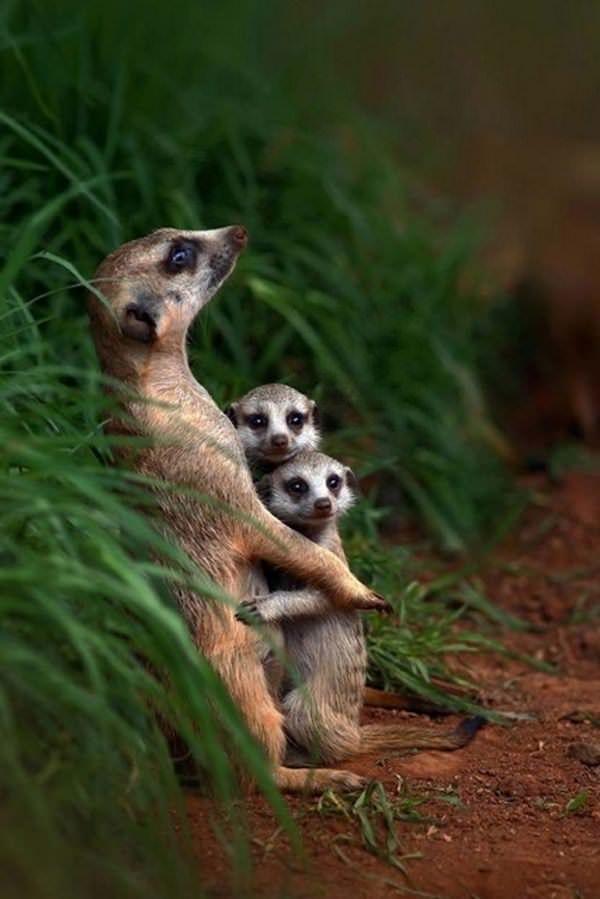 Fotos de familias animales muy tiernas y bonitas 3